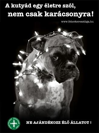 kutya-karacsonyra