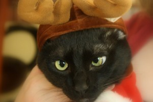 A karácsony és szilveszter állatáldozatai