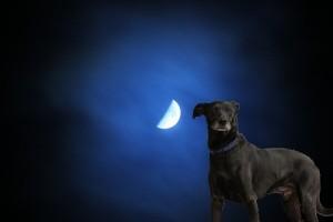 Miért vonyít a kutya a holdra?