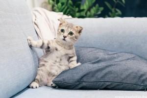 Egyedi macskanevek kandúr és nőstény cicáknak