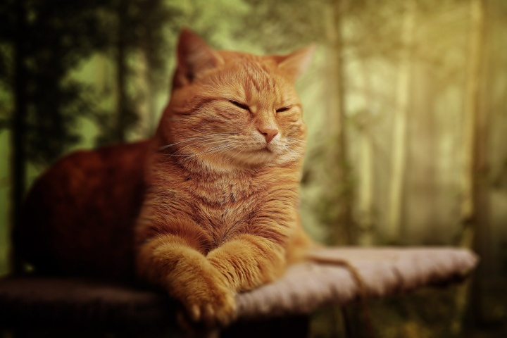 macskanevek, cicanév, kandúr, lány macska, cica, név