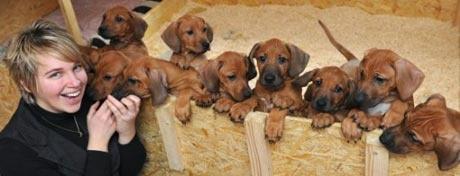 rhodesian-kutya