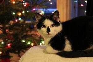 A legaranyosabb karácsonyi cicás videók