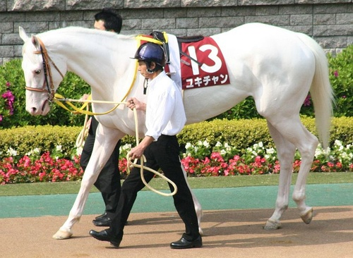 albino-kanca