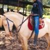 Az amerikai albínó ló