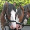 A ménes jelentősége egy ló életében