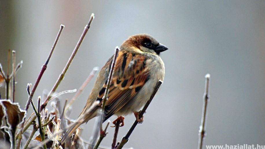 Veréb etetése: mivel etessük a kis madarakat?