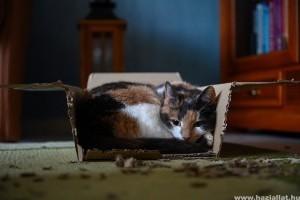 Mi a jól nevelt cica titka?