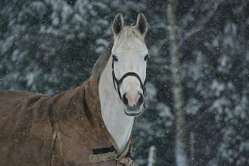 melegito-takaro-lovaknak