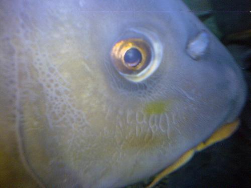 ponty-szeme