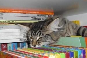 Könyvajánló: Roger Tabor - Kedvencünk, a macska (100 lépésben) a Replica kiadótól