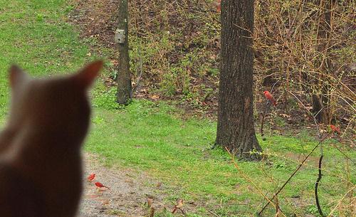 macska-figyeli-a-madarat
