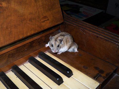 horcsog-es-zongora