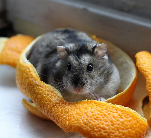 horcsog-narancs