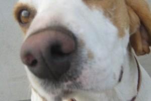 Szakembereink: Stefan Siman - okleveles állatterapeuta, kutyatréner
