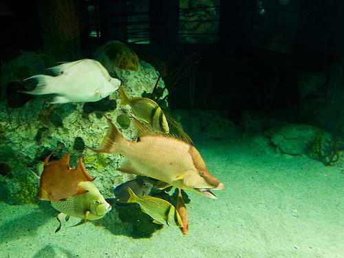 akvarisztika-foto