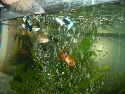 akvariumi-szurok
