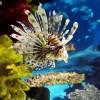 Komplett akvárium: mi kell hozzá?