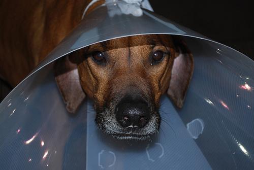 kutya-operacio-utan