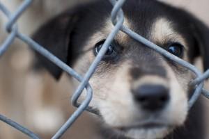 Segítsünk a Lelenc Kutyamentő Egyesületnek!
