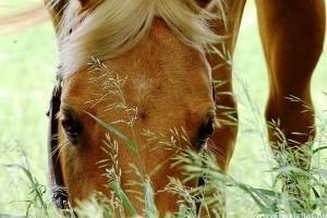 Gyógynövények az állatgyógyászatban