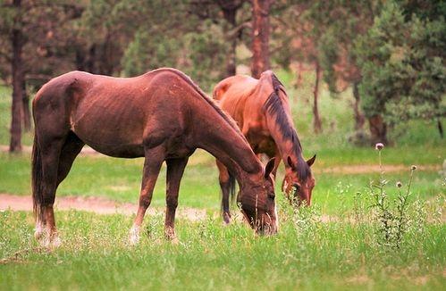 lovak gyógynövényes kezelése