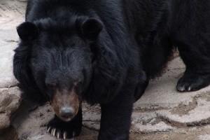 A Fővárosi Állat- és Növénykertben előjöttek a medvék