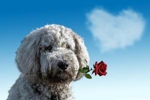 Így lepd meg kutyusod Valentin-napon!