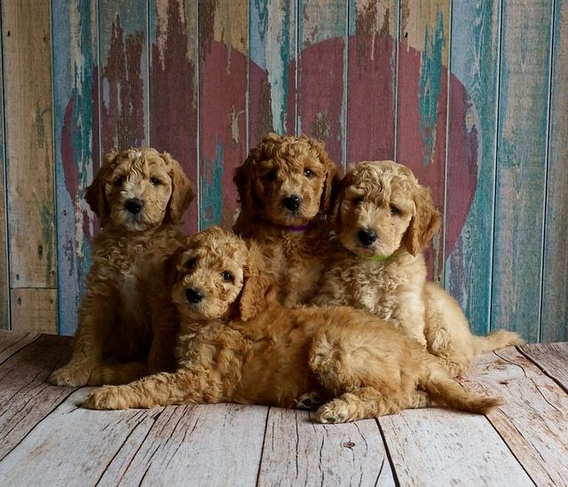 puppies-2044168_640