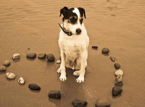 kutyajáték, kutyaszív