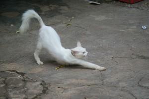 Mitikus macskák, vicces macskák és macskákkal kapcsolatos átverések