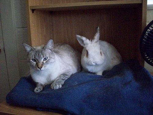 macska-es-nyul