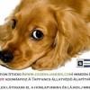 Tappancs Állatvédő Alapítvány