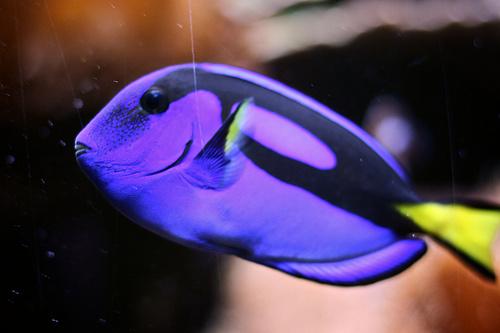 kek-zaszloshal