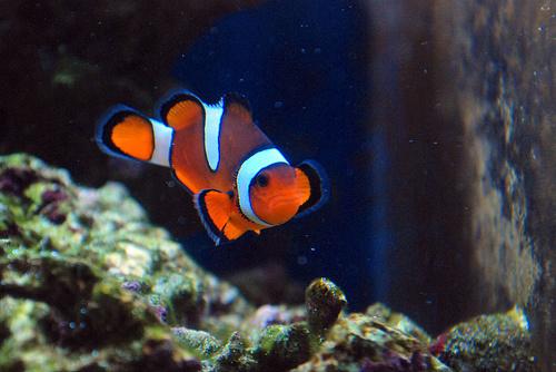 tengeri-akvarium-bohochal