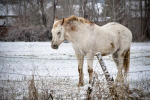 A lovak és az időjárás