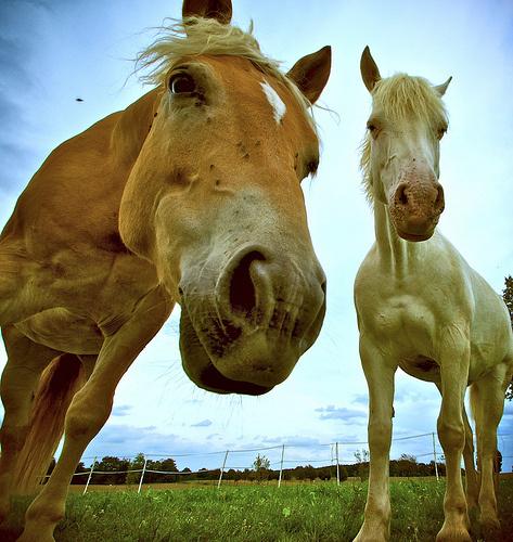 legyes-lovak
