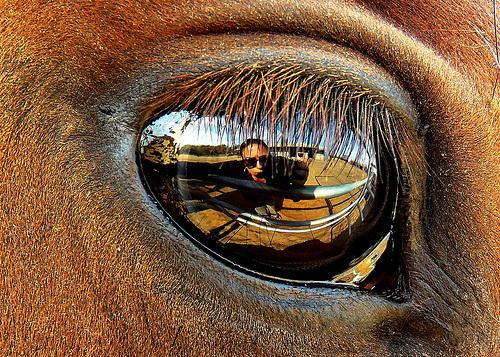 lo-kepek-szem