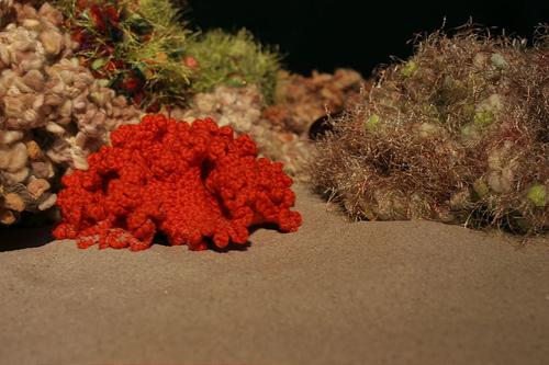 piros-korall