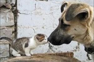 Meghívó Állatvédőrség aláírásra