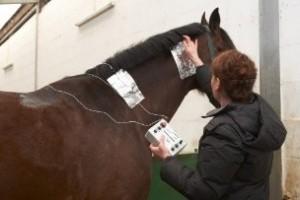 Modulált Elektroterápia lovaknál