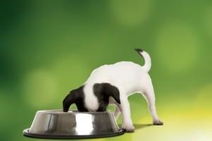 Kutyaeledel: Az EBéd legyen tápláló, és az sem baj, ha olcsó