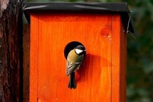 Mesterséges odúkkal csalogassuk a kertbe a madarakat!