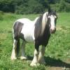Hogyan fényképezzünk le egy eladó lovat?