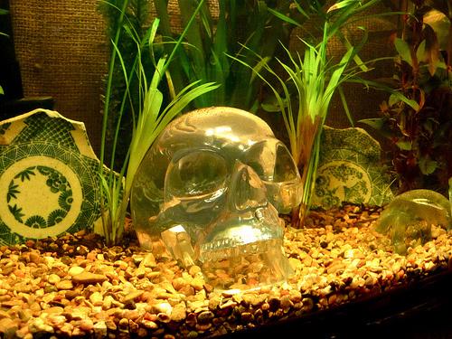 komplett-akvarium-diszites