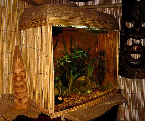 komplett-akvarium-foto