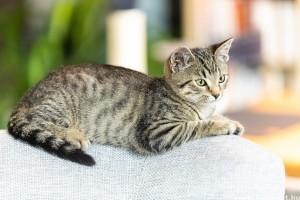 A cirmos cica személyiségtípusai