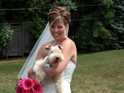 kutya-es-menyasszony