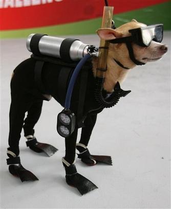 buvar-kutyafelszereles