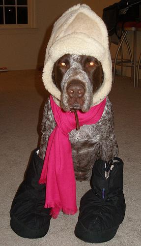 nagy-kutya-oltoztetes